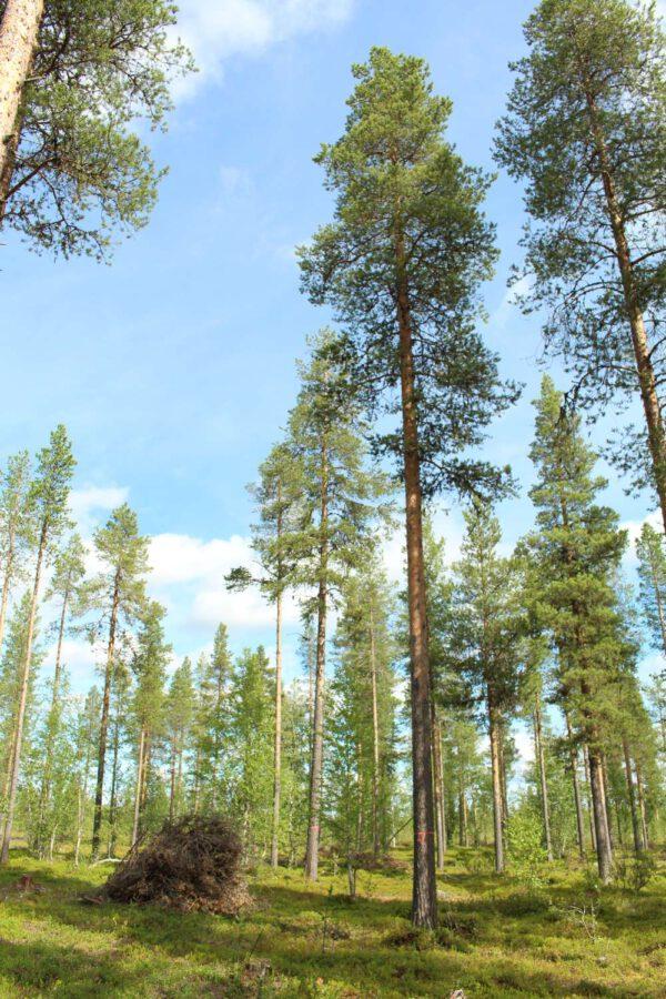 Tree #022-2995