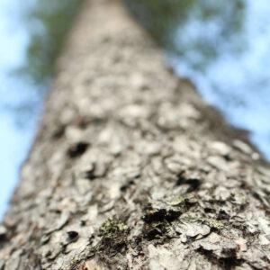 Tree #024-0