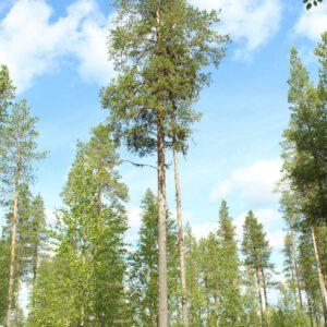 Tree #025-3019