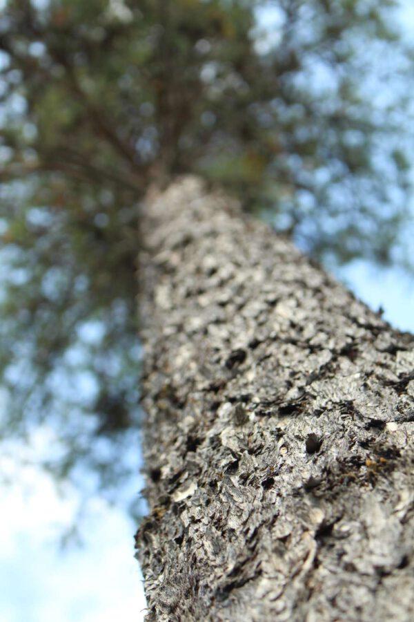 Tree #025-0