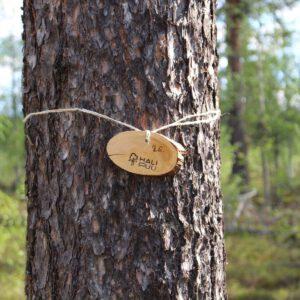 Tree #026-3040