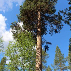 Tree #028-0
