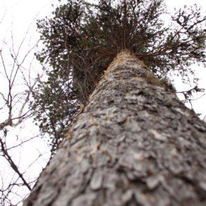 Tree #028-3054
