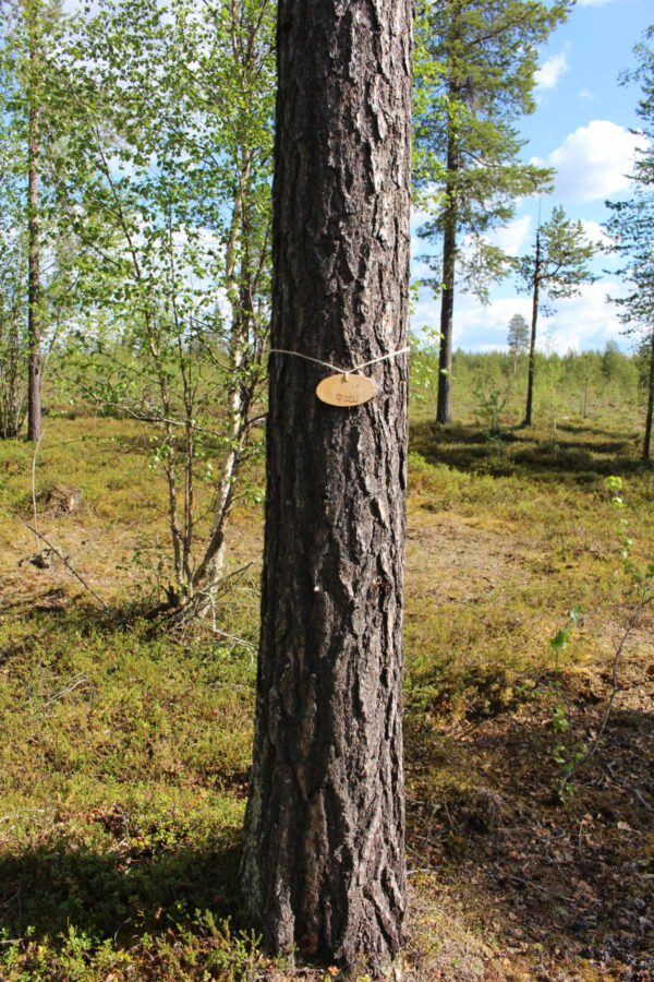 Tree #029-0