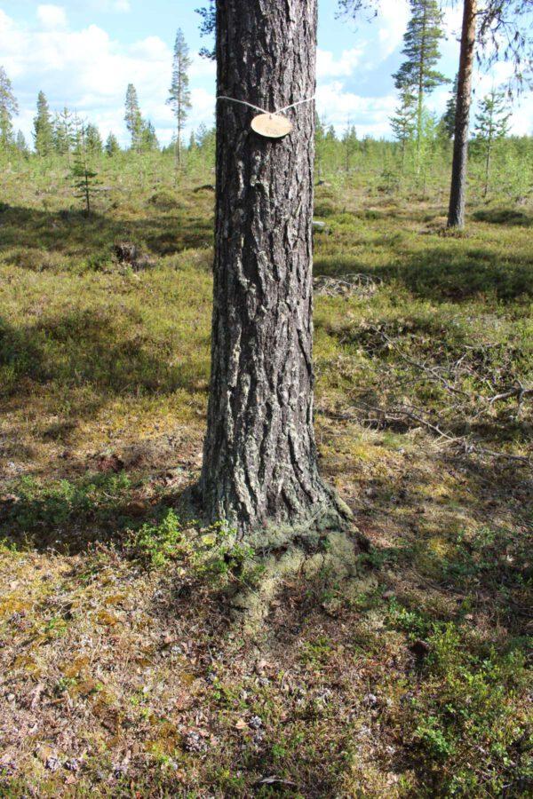 Tree #030-3064