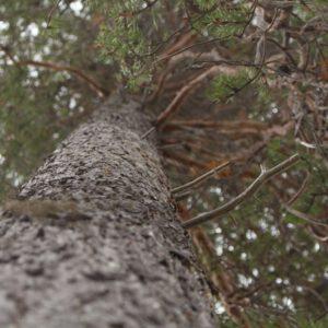 Tree #033-3106