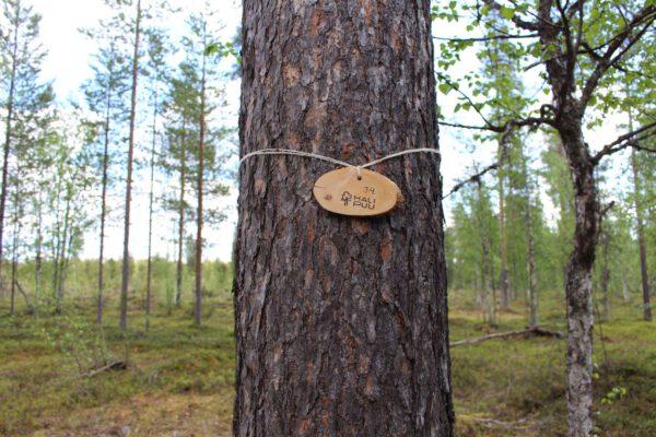 Tree #034-3110