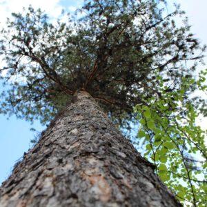 Tree #034-0