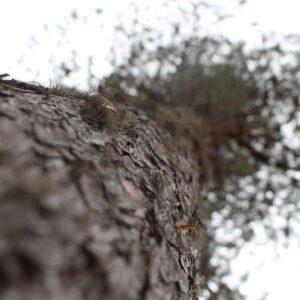 Tree #034-3112