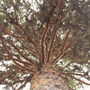 Tree #035-0