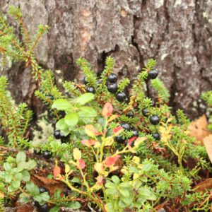 Tree #035-3118