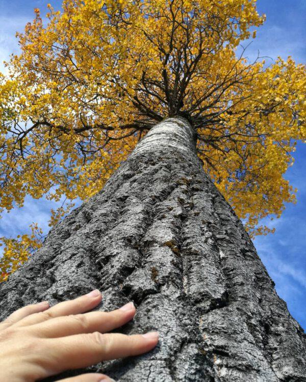 Start a tree clan-3162