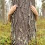 Group logo of Tree hugging pictures