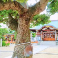 halipuu